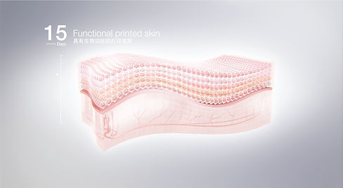 3D Skin Maturation - 15 Days.jpg