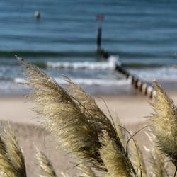 Boscome Sea Grass
