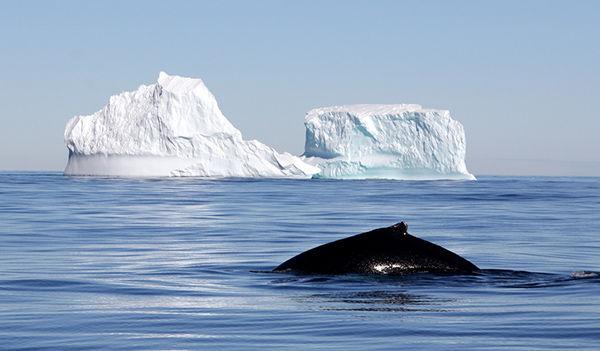 Арктический кит любит чистую воду. Мы тоже.