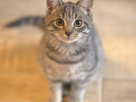 Et si on papotait avec votre chat ?