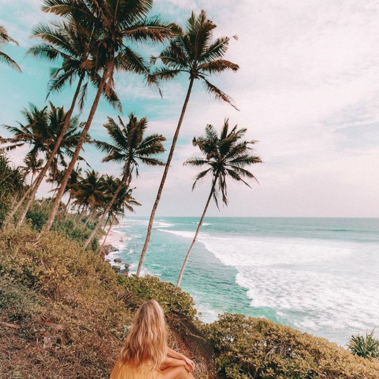Palm trees and waves as far as the eye c