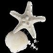 kisspng-seashell-gratis-pearl-sea-shells