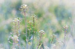 meadow-2200630_1920