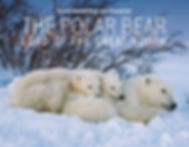 Polar Bears_cover_LR.jpg