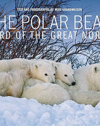 The Polar Bear: Lord of the Great North