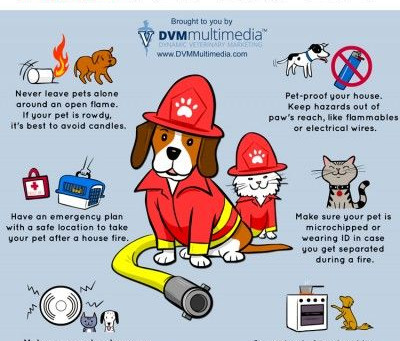 Pet Fire Safety Awareness Day!