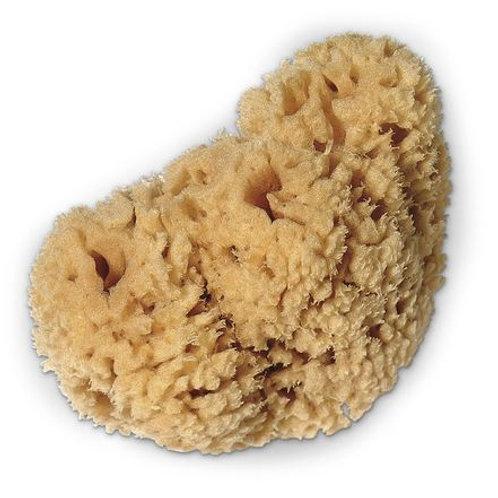 Sheepswool Sponge