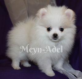 Meynadel Valkea Lilja