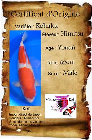 Kohaku n°1.png