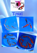 tosai site.png