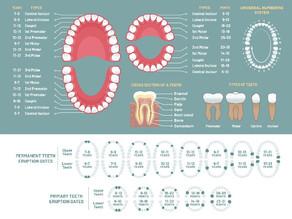 Síntesis Histórica de la Odontología Legal
