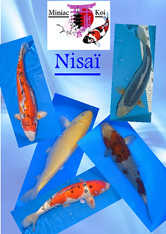 nisai site.png