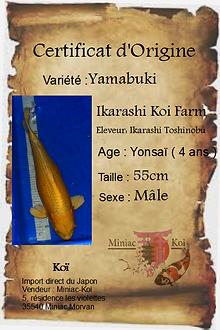 Yamabuki.png