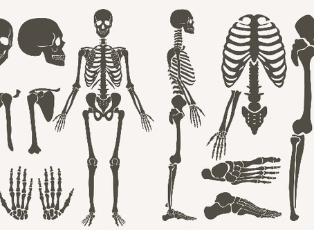 Cómo Conocer el Sexo de un Esqueleto Humano