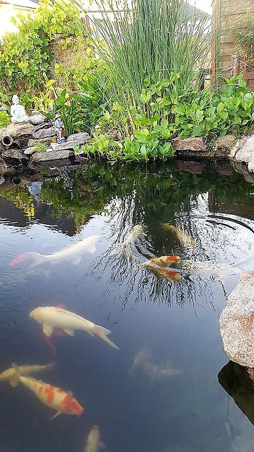 Miniac-Koïs spécialiste du bassin de jardin en bretagne