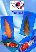 yonsai.png