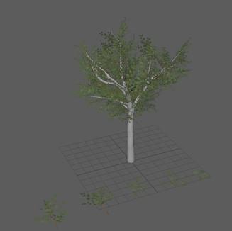 Week 6 - Workflow Tree branch