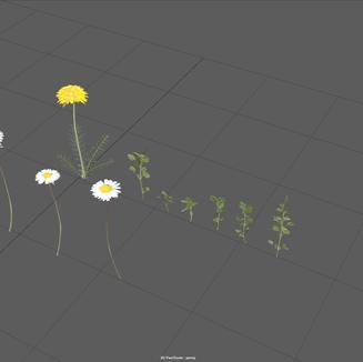 Week 3 - Flowers