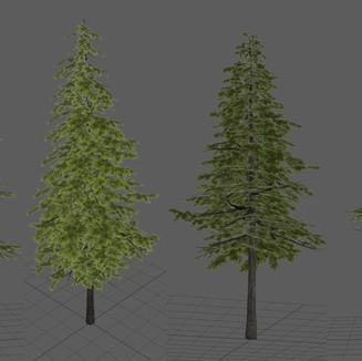 Week 5 - Trees