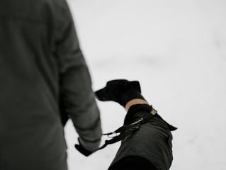 Hunde sind an der Leine zu führen