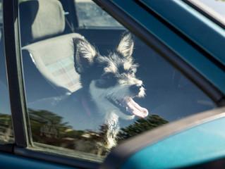 Erneute Hitzewelle kann Heimtiere in Gefahr bringen