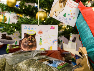 Weihnachtsbaum-Aktionen starten