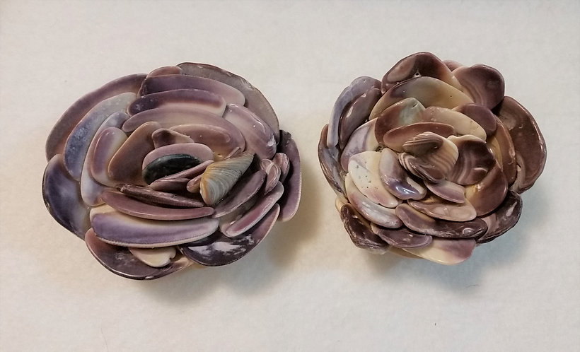 Shell Flower | Quahog | Shell Art | Dark Purple | Paperweight