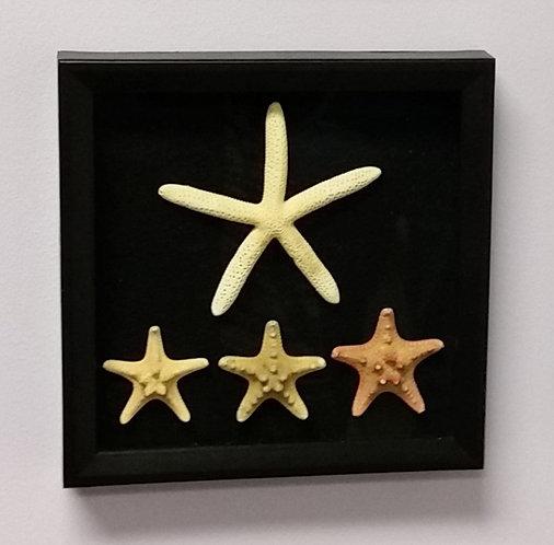 Starfish | Seashell Wall Art | 1 of 3 | 9 x 9in (1 of 3)