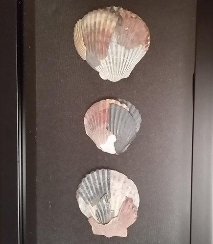 Broken Shells   6 x 14 inch Shadow Box