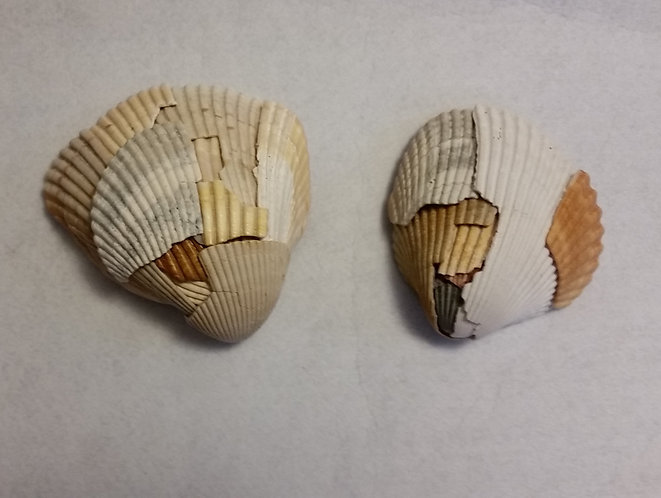 Broken Shell | Shell Art | Earth's Natural Art and Jewelry