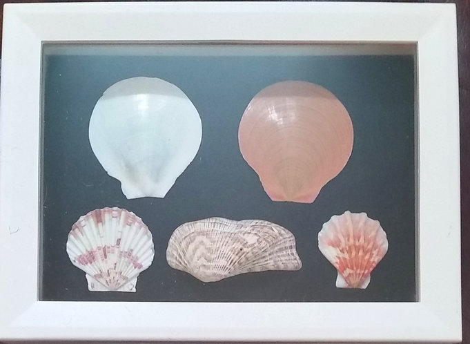Natural color shells | 6 x 8 inch shadow box