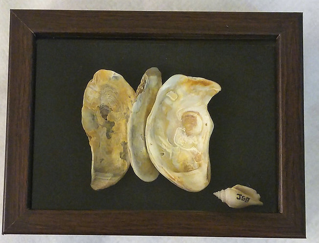 Butterfly made of seashells | 5x8 inch shadow box.