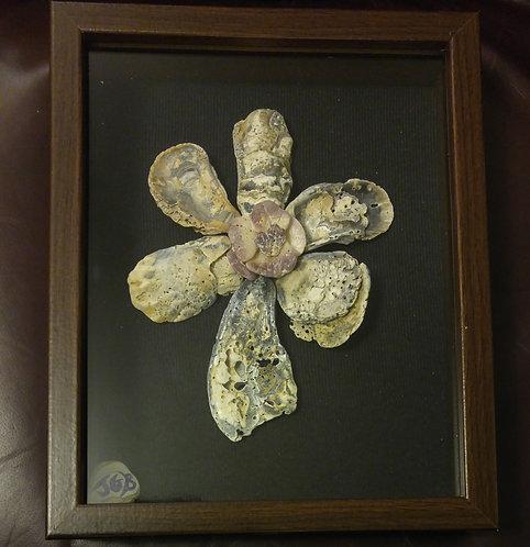 Flower Shell | Sea Flower | 9 x 10 inch shadow box
