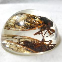 Brood X Cicada Mania