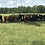 Thumbnail: 1/4 COW (+/-150lb) Black and Red Angus