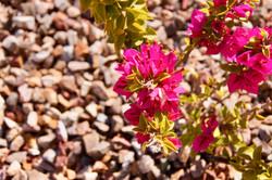Flowers in back yard