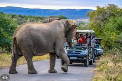 full-day-hluhluwe-imfolozi-park-safari-2