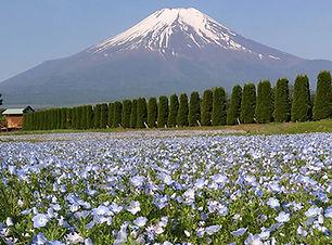 花の都公園.jpg