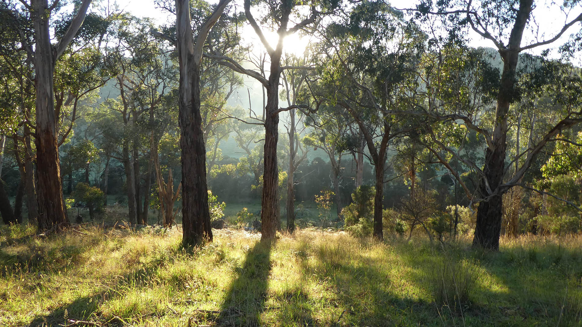 Bush facing east to Merricks