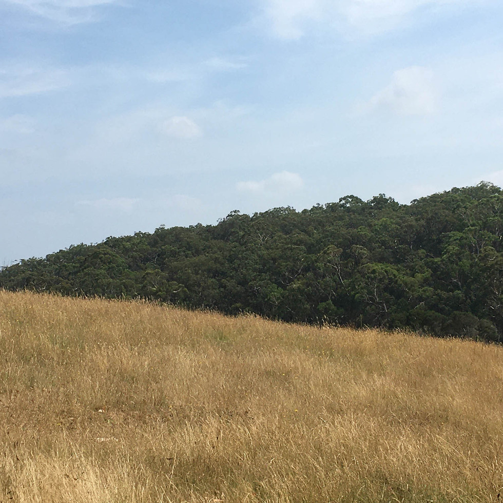 Pasture and bushland