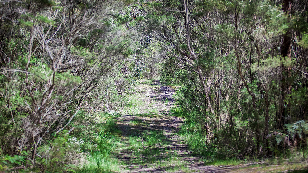 Track to lake