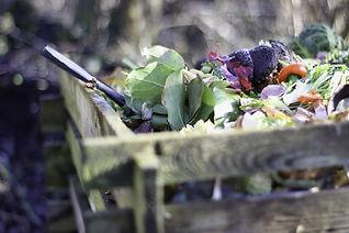 garden-4725522_1920.jpg