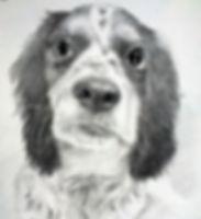 Potrait of a Cockerspaniel hunting dog