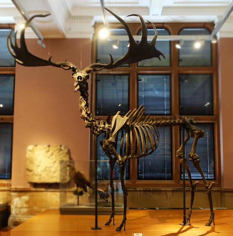 Kelinsgrove-skeletal.jpg