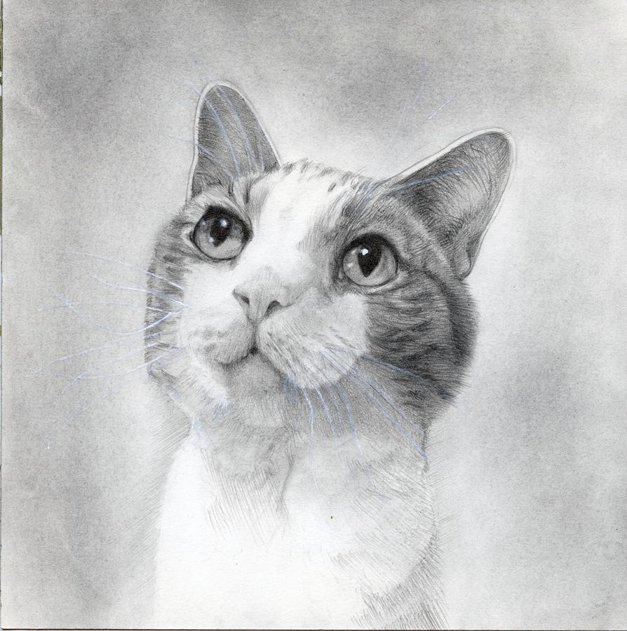 Portrait of Sire