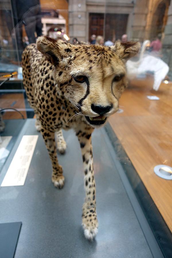 Kelinsgrove-leopard.jpg