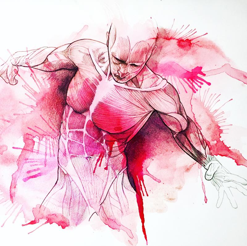 Anatomica iia