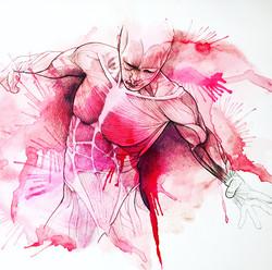 Anatomia 1b - Musculature
