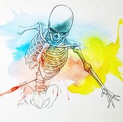 Anatomia 1a - Skeletal