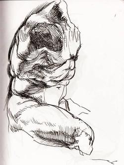 Sketch of the Belvedere Torso IV